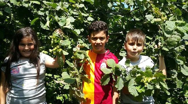 Çocukların fındık bahçesinde çalıştırılması yasaklandı