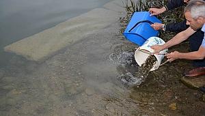 Gaga gölüne 25 bin sazan balığı yavrusu bırakıldı