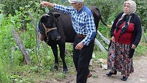 Ordu Takip sosyal medya takipçileri yaşlı çifte inek aldı
