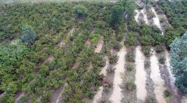 Fındığın yüzde 30'u sele gitti