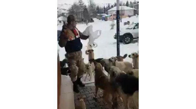 Yaylada aç kalan köpekleri jandarma besliyor