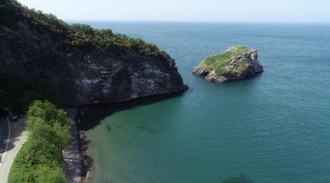 Hoynat Adası, kuşların yaşam alanı