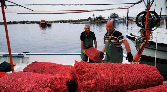 Balıkçılar deniz salyangozuna yöneldi