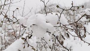 Kar fındığa fayda sağladı