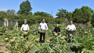 Ordu'da Tarımsal Çeşitlilik Artıyor